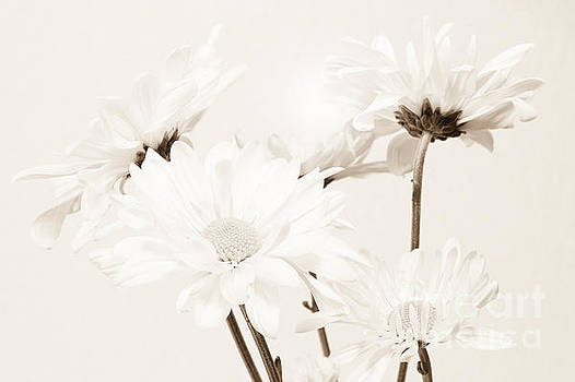 Floral Elegance II by Anita Oakley