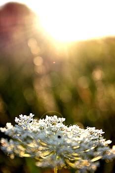 Floral Light by Kyle Ferguson