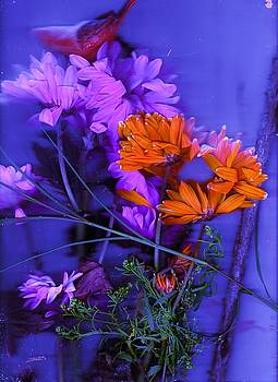 Anne-elizabeth Whiteway - Floral on Blue