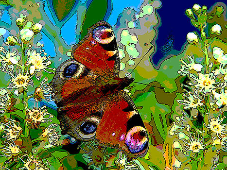 Florida Butterfly by Charles Shoup