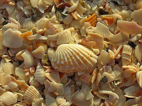 Juergen Roth - Florida Sea Shells