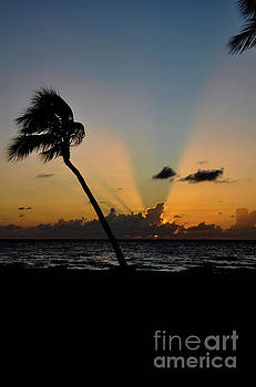 Florida Sunrise Palm by Kelly Wade