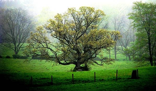 Flourish Where You Grow by Angela Davies