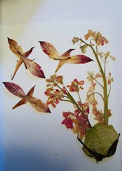 Flower Birds by Bill OConnor