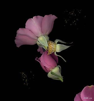Heather Kirk - Flower Box Purple Cut