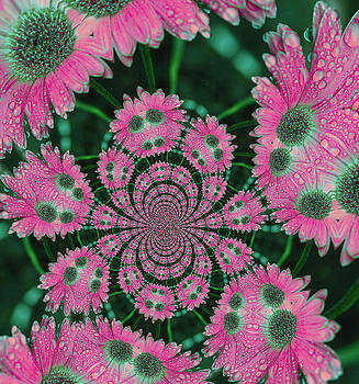 Karol Livote - Flower Design