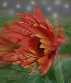 Linda Sannuti - Flower dreams