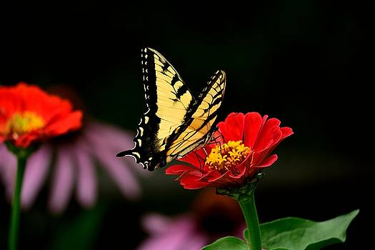 Flower Friends by Terri Waselchuk