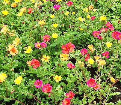Flower Garden by Karen Nicholson