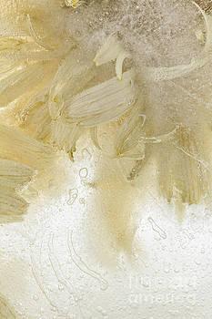 Flower in Ice 3 by Ann Garrett