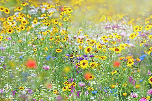 Flower Meadow by Jacky Parker