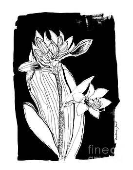 Flower on black by Cristina Jaco