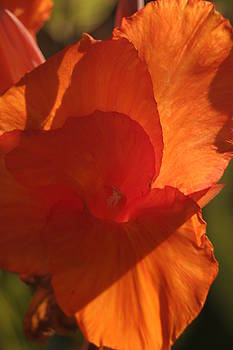 Chuck Kuhn - Flower Orange