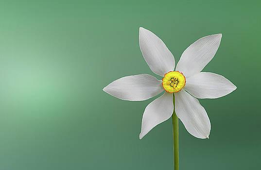 Flower paradise by Bess Hamiti