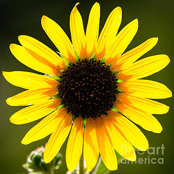 Flower Power by Charles Dobbs