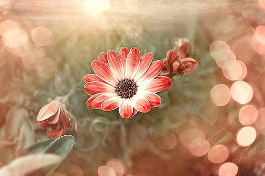 Thomas Christoph - flower power