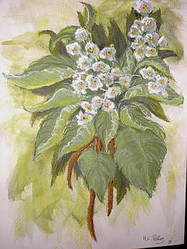 Flowering Bean Tree by Curt Peifley