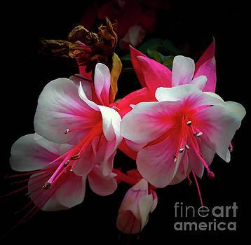 Flowering Bells by Jasna Dragun