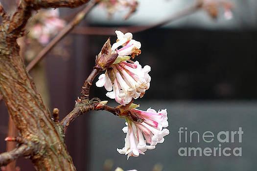 Flowering in December by Eva-Maria Di Bella