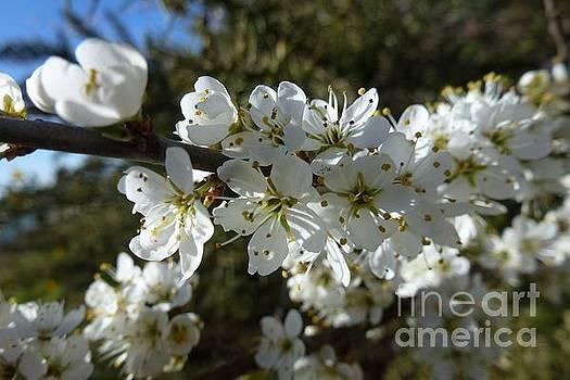 Flowering of White Flowers by Jean Bernard Roussilhe