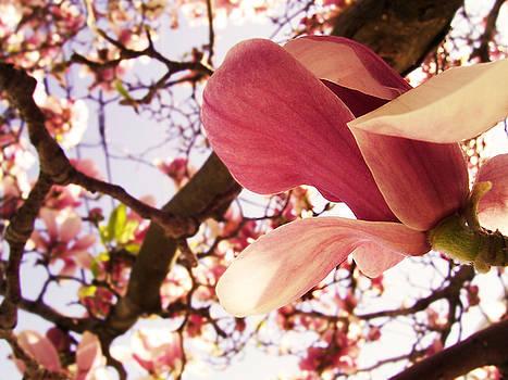Flowering Tree by Tylir Wisdom