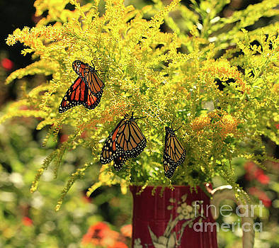 Flowers and Butterfies in Red Vase Photo by Luana K Perez