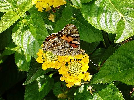 Flowers and Butterfly by Gonca Yengin