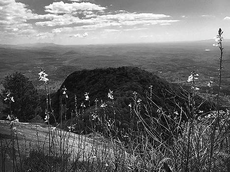 Flowers at Table Rock Overlook in Black and White FOUR by Kelly Hazel