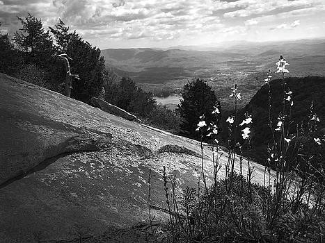Flowers at Table Rock Overlook in Black and White THREE by Kelly Hazel