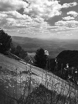 Flowers at Table Rock Overlook in Black and White TWO by Kelly Hazel