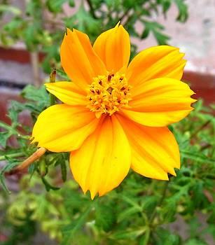 Flowers by Baljit Singh