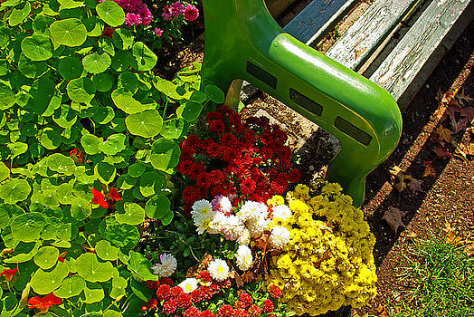 Flowers by green bench by Zalman Latzkovich