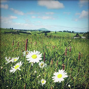 Flowers field by Les Cunliffe