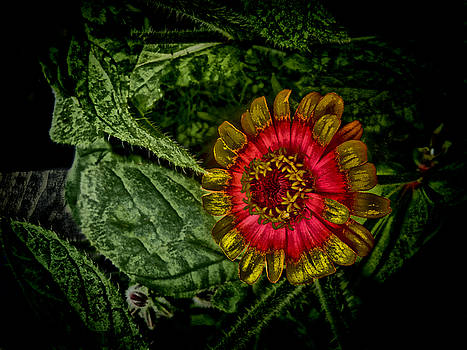 Flowers For Isabella by Bobbie Barth