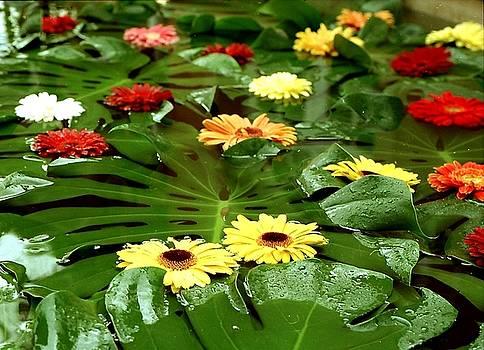Flowers for you by Juozas Mazonas