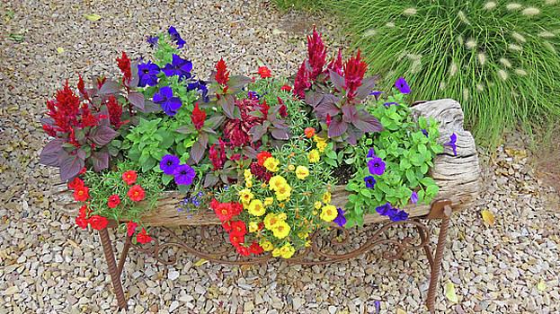 Flowers  In  A  Log by Carl Deaville