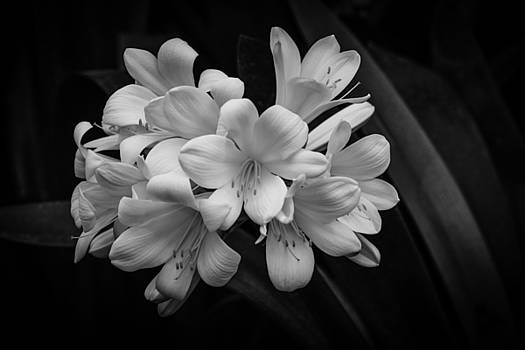 Flowers In Light by Ray Congrove