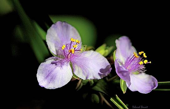 Deborah Benoit - Flowers In Natural Light