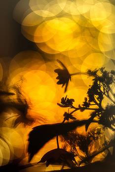Flowers in the Dark by Scott Wyatt