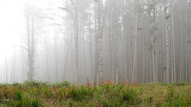 Flowers in the Mist by Larry Darnell