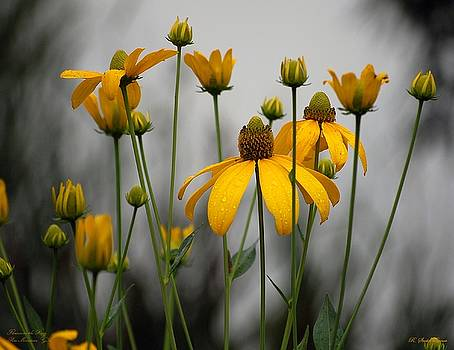 Flowers in the rain by Robert Meanor