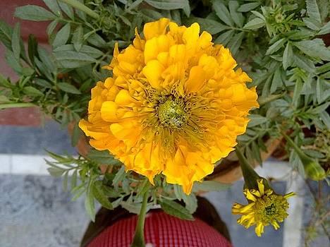 Flowers Of Love by Baljit Chadha