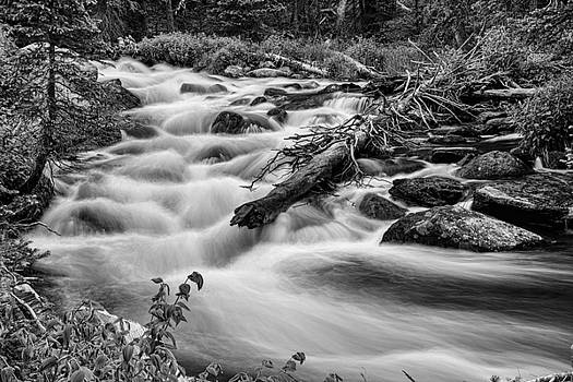 James BO  Insogna - Flowing Rocky Mountain Stream in Black and White