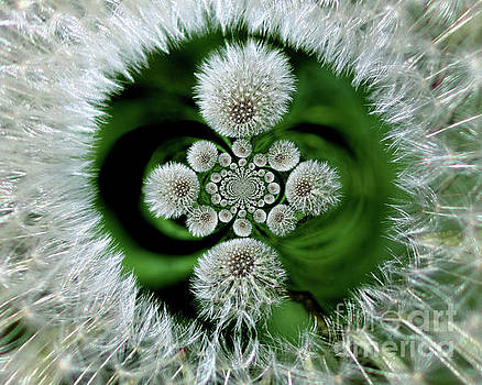 Fluffy Dandelion Abstract by Smilin Eyes  Treasures