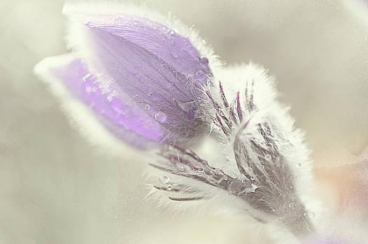 Jenny Rainbow - Fluffy Marvel