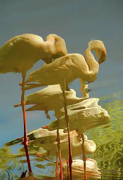 Donna Blackhall - Flummoxed Flamingos