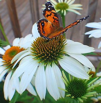 Flutter by Sarah Hamlin