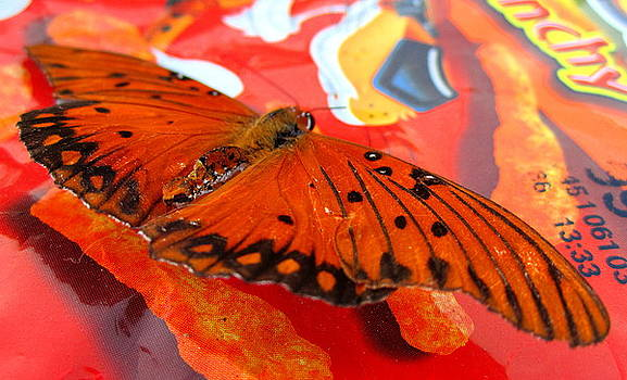Flutterby XVI by Radical Reconstruction Fine Art Featuring Nancy Wood