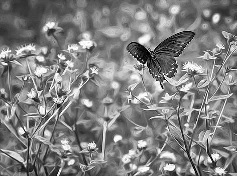 Steve Harrington - Fluttering Swallowtail bw