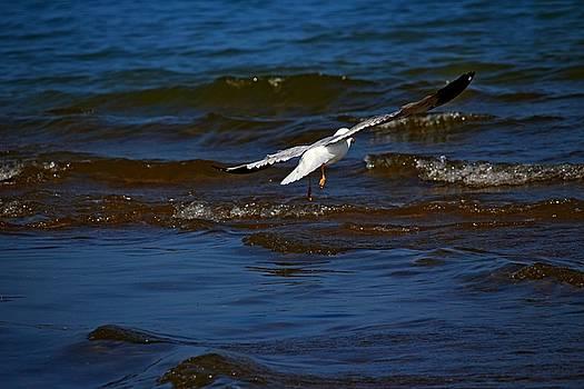 Fly Away by Amanda Struz